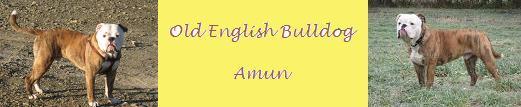 old-english-bulldog-amun.de.tl